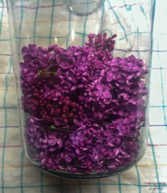 Flieder-Sirup_Blütenglas